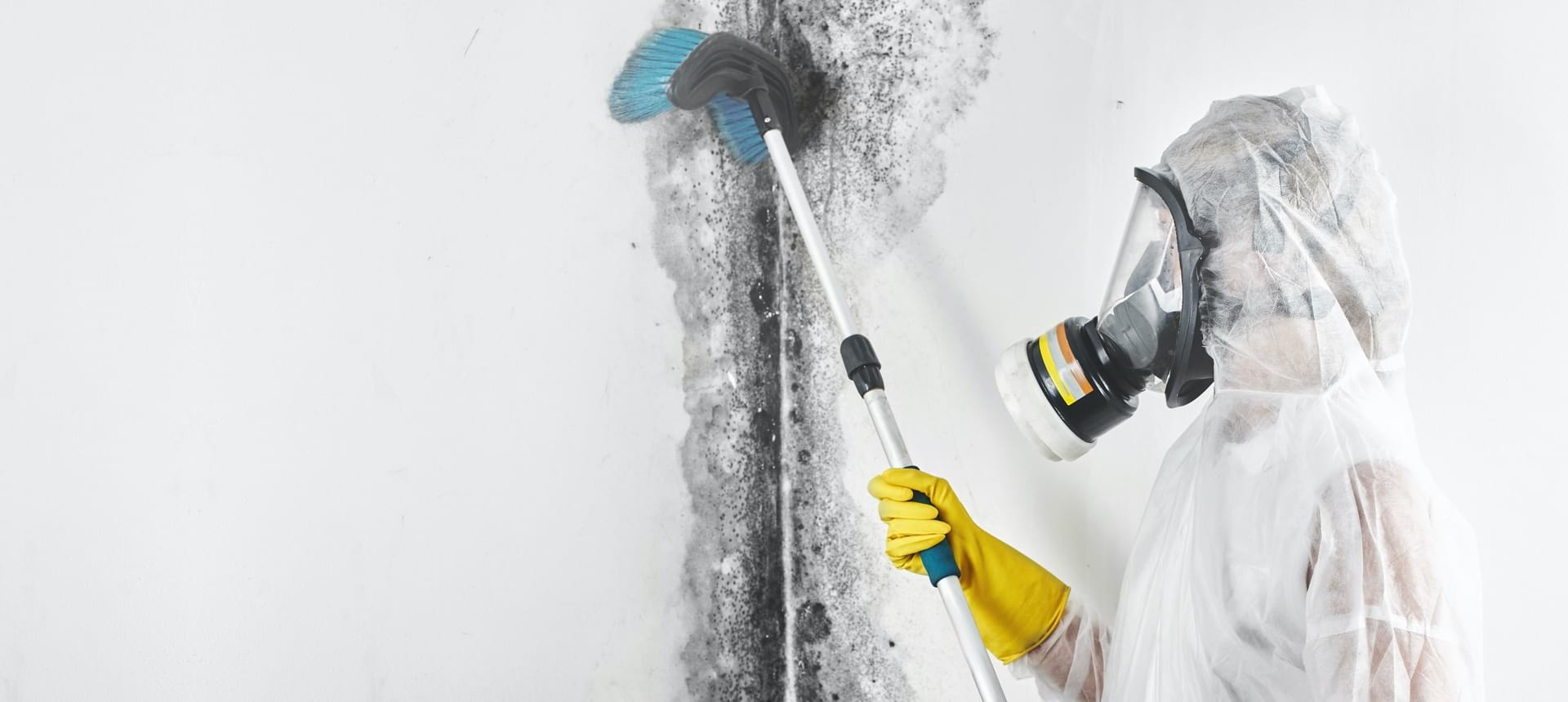 Professional mold removal and cleaning contractor